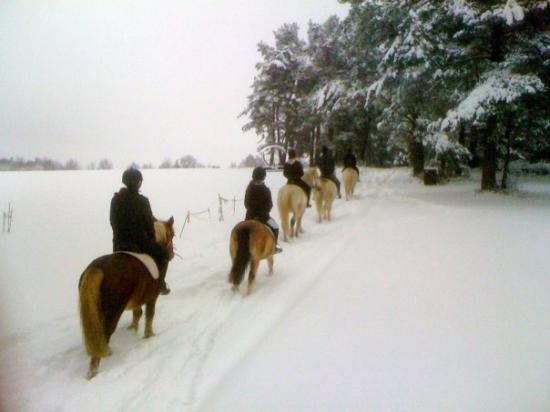 Balades dans la neige prés des Ecuries....