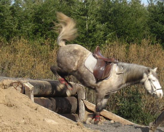 Question : Le cavalier à t'il chuté ?