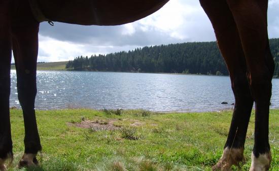 Jordie et.....le calme du lac Servière